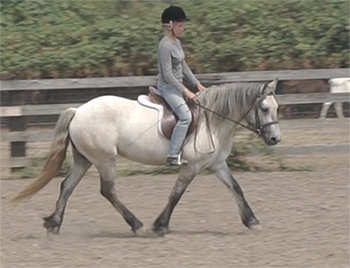 Highland mare                             Mingulay ridden English